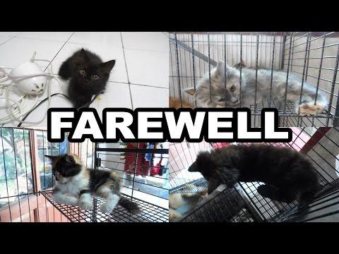 FAREWELL CATS