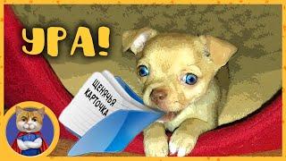 Щенки получают щенячьи карточки