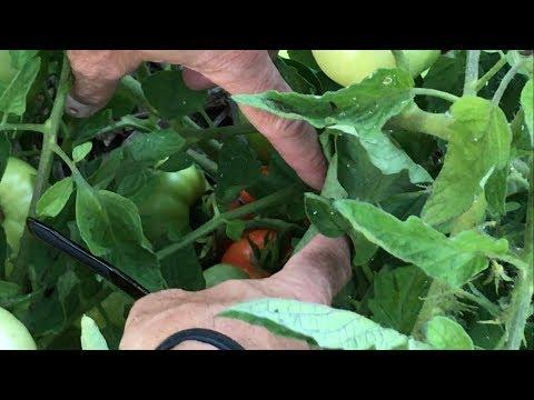 Garden Tour w/ Updates - No Till Soil Project, Back to Eden Garden, & Trees for Bees