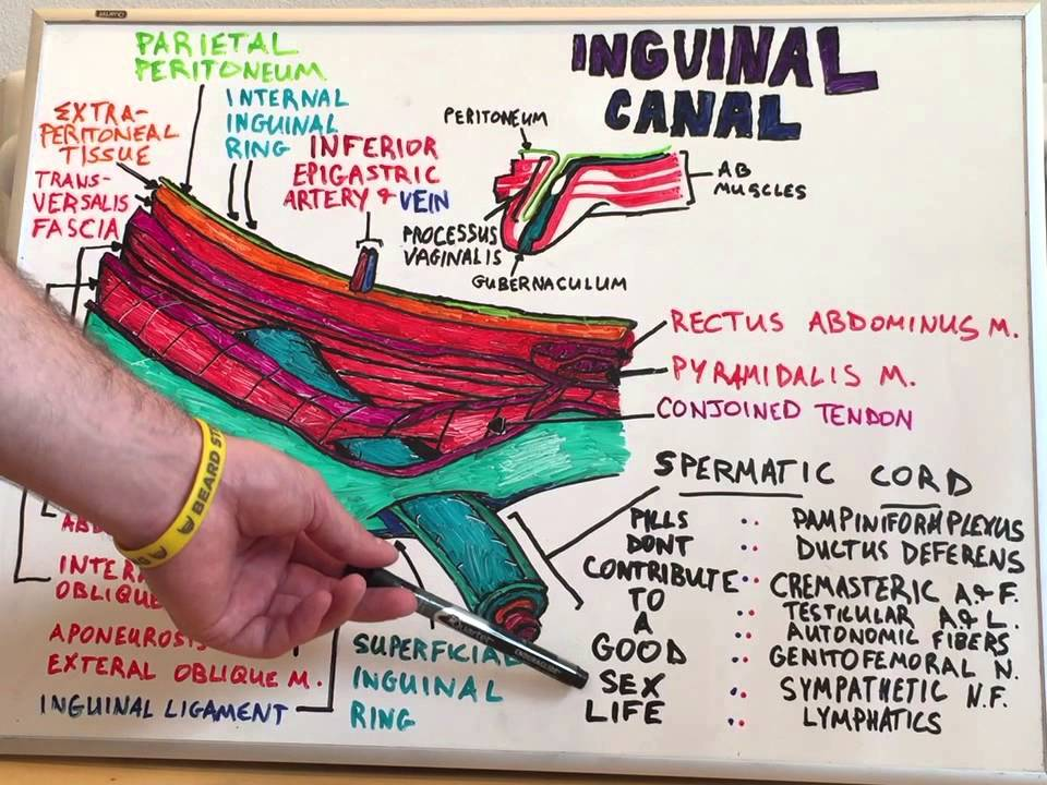 Inguinal Canal Anatomy Lecture For Medical Students Usmle Step1