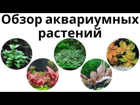 Обзор аквариумных растений