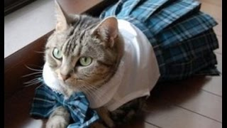 Cute & Funny Cat Compilation  Japan Version