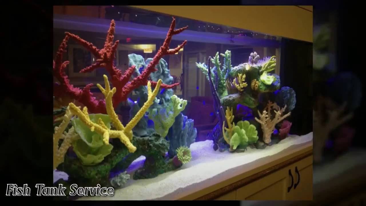Fish tank cleaning service - Best Fish Aquarium Cleaning Service Jacksonville 904 588 2700 Jacksonville Fl