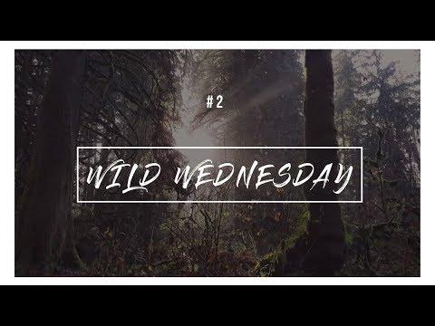 Wild Wednesday #2  | Kanaka Creek Cliff Falls