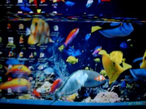 Peces en mi pc mov youtube - Fotos de peces tropicales ...