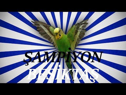 ŞAMPİYON BEŞİKTAŞ SES Papağan ve Muhabbet Kuşu Konuşturma Sesi Ses Kaydı 1 SAAT