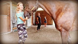 DOES YOUR HORSE REALY LOVE YOU CHALLENGE  SO EMOTIONAL