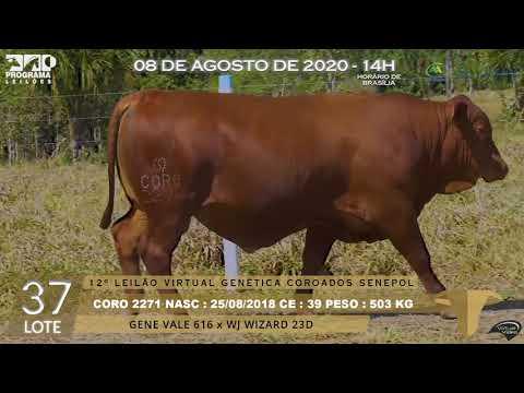 LOTE 37 CORO 2271