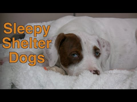 Beautiful Sleepy Dogs and Cute Sleepy Puppies at Northeast Animal Shelter: Sleeping Dogs Compilation