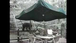 Bear On My Deck