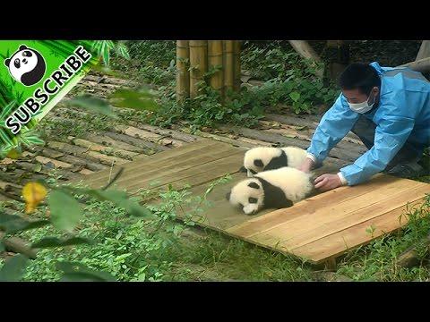 Super Lazy Panda Baby Youtube