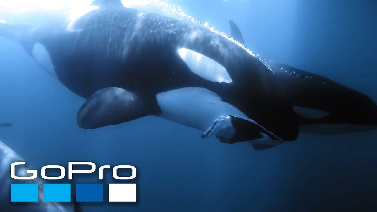 GoPro Cause: Ocean Souls | A Cetaceans Film