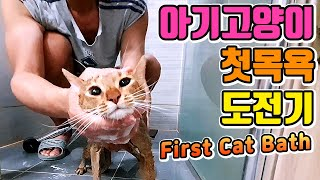Kitten Bathing Day, Cat First Bath Challenger | Water-loving cat Abyssinian (FIRST CAT BATH)