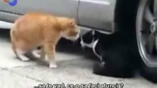 faza tare cu doua pisici:))