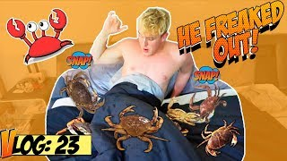 LIVE CRABS IN JAKE PAUL'S BED (PRANK!!)