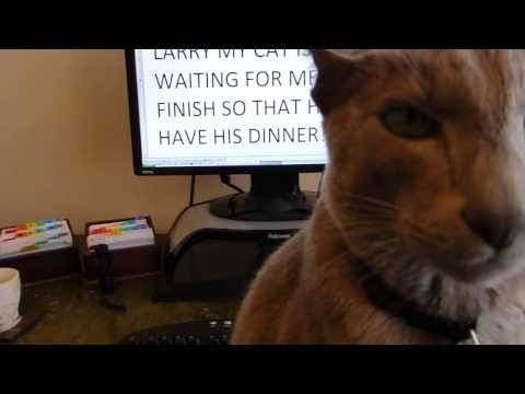 Larry Cute Oriental Cat asks for his dinner
