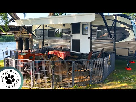 HOW TO SAFELY CONTAIN MULTIPLE DOGS WHILE RV CAMPING | Exercise Pens