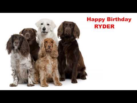 Ryder - Dogs Perros - Happy Birthday