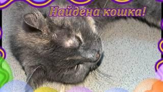 Кошку - в добрые руки!.mpg