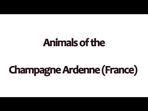 Animals of the Champagne Ardenne (France) - Dario Duijves wildlife media