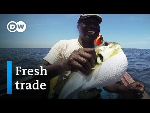 Fighting Poverty With Fish | DW Documentary