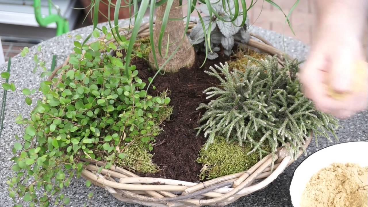 Minigarten Gestalten mini gärten anlegen und dekorieren