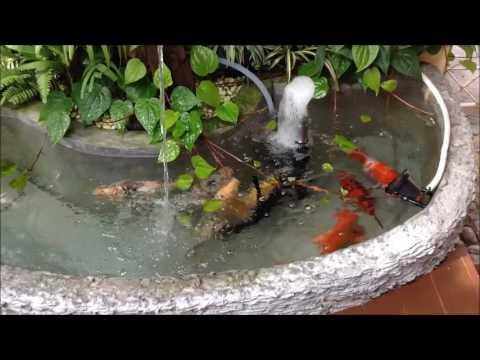 การเลี้ยงปลาคราฟในบ่อขนาดเล็ก(สร้างบ่อด้วยฝีมือเราเอง)