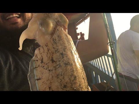 Cuttlefish in Qatar -Dhow Trip- Thakira Shallows