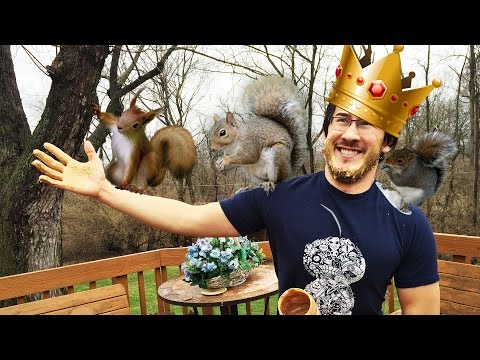 King of the Squirrels Returns