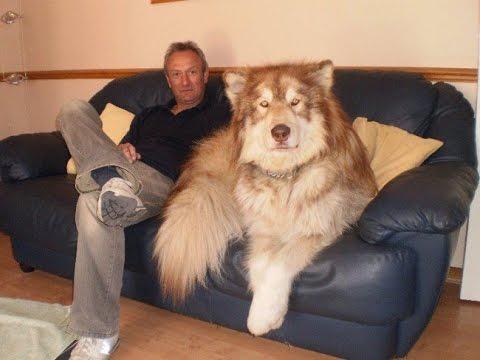 фото пород больших собак
