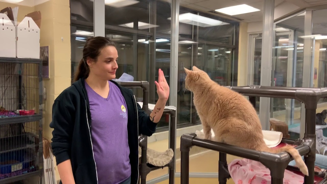 Cinnamon at Monmouth County SPCA Giving a High Five and a Fist Bump