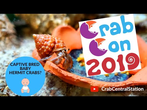 CrabCon 2019    America's First Ever Captive Bred Hermit Crabs!