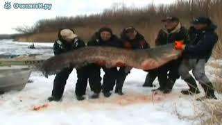 Приколы на охоте и рыбалке