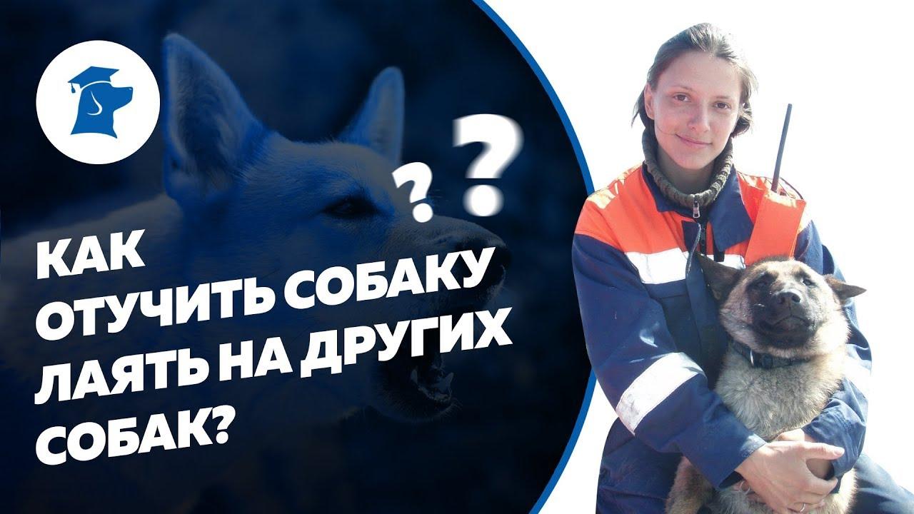 Как отучить собаку лаять на собак? Как отучить собаку тянуть поводок? Обучение собаки команде Рядом.