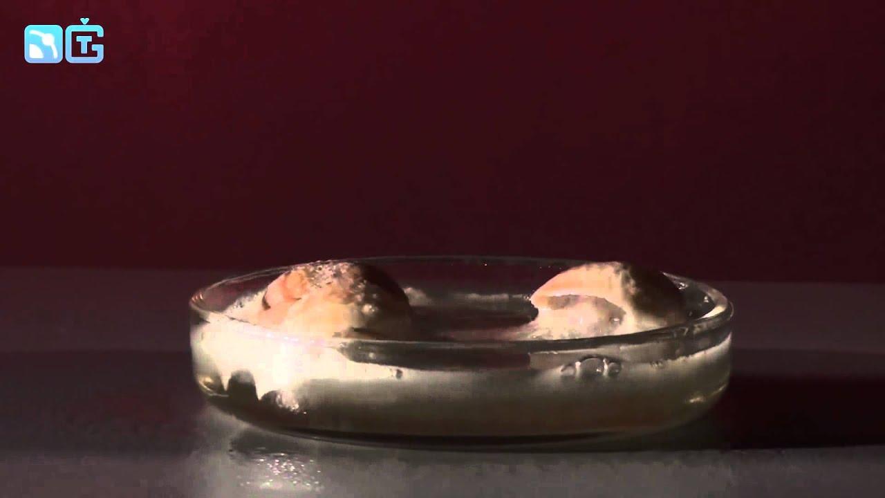 Утилизация ракушек в кислоте   химические опыты 1080p