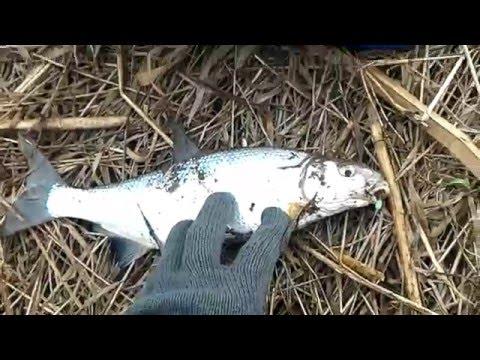 Снасти на рыбца своими руками