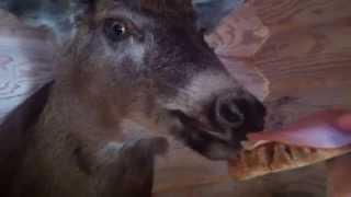 Deer & Karelian Pie
