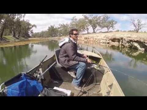darling river cod fishing