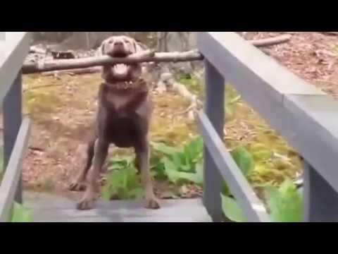 Funny animal II girl dog names
