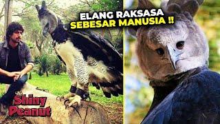 Gambar cover Fakta Mengejutkan Dibalik Viralnya Burung Elang Harpy Berukuran Raksasa