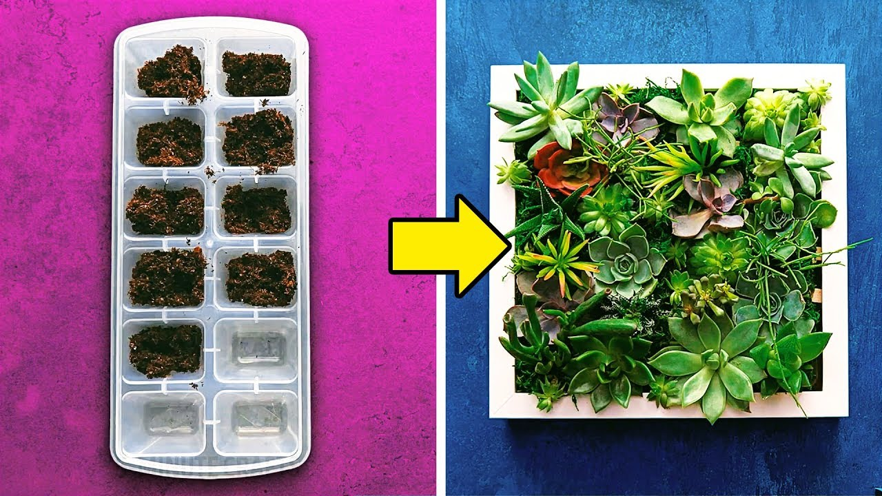 12 Succulent Planting Ideas Youtube