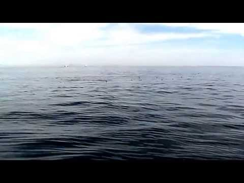 Whale watch off Cape Ann out of gloucester Mass