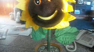 You Are My Sunshine Singing Sunflower