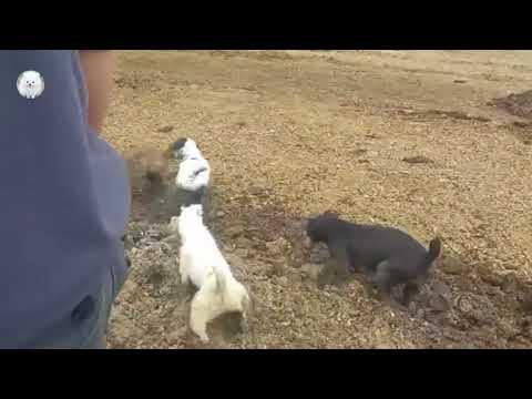 次々出てくるネズミを次々と捕食する犬たち
