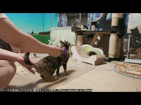 2018.8.4 猫日記ブラッシング   Cats & Kittens room 【Miaou みゃう】