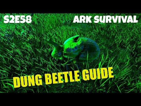 Taming a Dung Beetle |  Tips and Gameplay | (E58) ARK: Survival Evolved