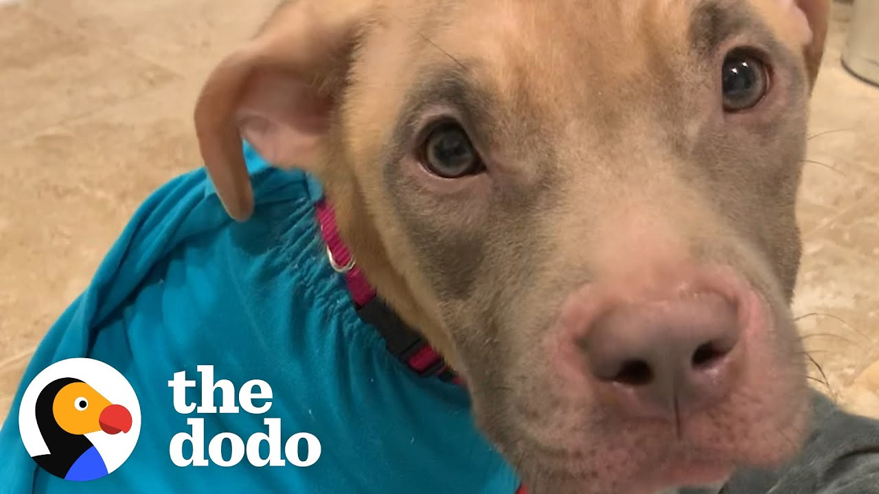 Puppy Found Tied To Pole Is Glued To Her Mom's Side Now    The Dodo Foster Diaries