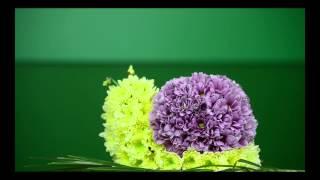 Доставка цветов и букетов по Киеву, Украине и миру. http://buket-express.ua/(, 2014-10-07T20:44:16.000Z)
