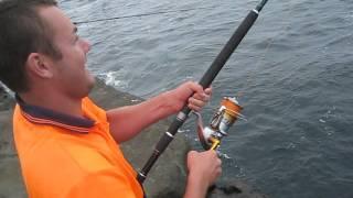 Land Based Kingfish NSW