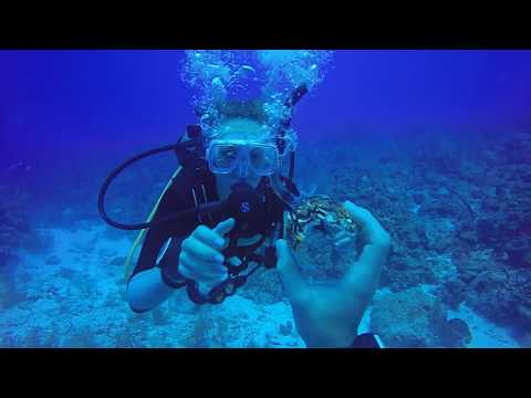 GoPro: Cayman Islands Scuba Diving